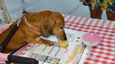 One of our patients enjoying a Barkarita from Doggie Bag Cafe and Dog Boutique.