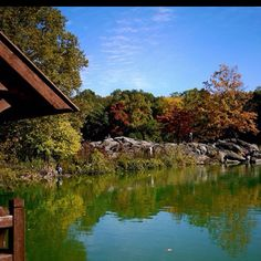 Central Park, NYC. Beautiful Fall- I miss being close to New York City. I am going for a visit in a few weeks though, but on academic research.. not park seeing. :<