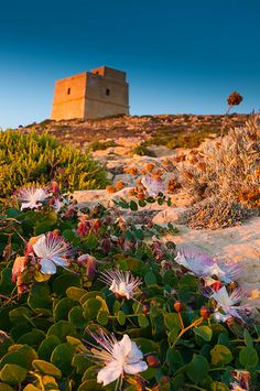 Dwejra Tower, Gozo │ #VisitMalta visitmalta.com