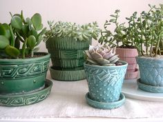 Gardening Ideas to Beautify Your Space Container Garden Ideas with Succulents For a floortoceiling indoor garden effect try placing succulent Container Garden Ideas with. Succulent Gardening, Succulent Pots, Planting Succulents, Garden Pots, Potted Plants, Container Gardening, Indoor Plants, Garden Ideas, Indoor Gardening
