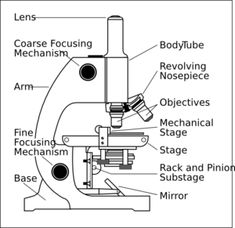 Worksheets microscopes microscopic pinterest worksheets parts of a microscope worksheet ccuart Image collections