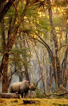 Forest #Rhino © Greg du Toit