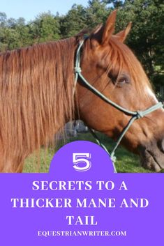 5 ways to give your horse a thicker mane and tail #horsegrooming #horsegroomingtips #horsecare #horsecaretips