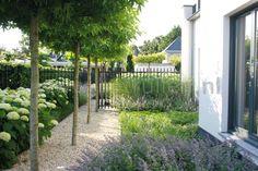 Tuinontwerp tuinaanleg Eindhoven Nuenen voortuin met strakke bomenrij grindpad plantenborder en hekwerk