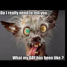 Hilarious, Funny & Sexy has members. Welkom by Afrikaner humor en witt, hilarious and funny pics (ADULTS Lees asseblief die reels van. Ugly Animals, Cute Animals, Funny Animal Faces, Animal Pictures, Funny Pictures, Funny Pics, Crazy Pictures, Ugly Dog Pictures, Funny Morning Pictures