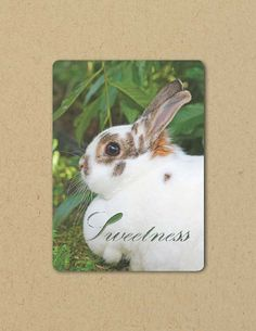 Photo Greeting  Card SWEETNESS BUNNY Eco by FarmFreshPhotography, $4.25