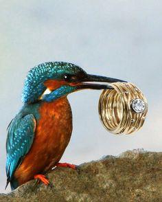 Devon, Modern Jewelry, Bird, Animals, Common Kingfisher, Ring, Schmuck, Animales, Animaux