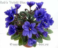 Rob's Twinkl Blue