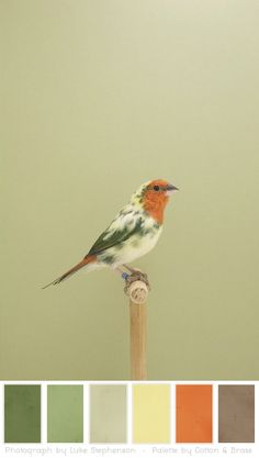 Color Play – Show Bird Photographs by Luke Stephenson « Cotton & Brass