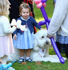 Charlotte turns her attention to a poodle-golden retriever cross who works as a pet therap...
