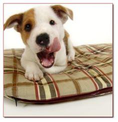 ey mei meinem süßen hundi werd ich auch so ein #hundekissen kaufen! http://www.dogsfinest.de/category/hundekissen.101.html