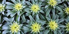 Image result for bromeliads