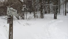 Sentier, mont Jackson, New Hampshire, USA, février 2017 New Hampshire, Jackson, Snow, Usa, Outdoor, Pathways, Outdoors, Outdoor Games, The Great Outdoors
