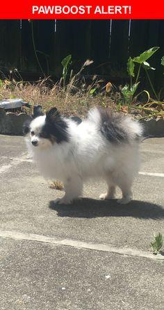 Please spread the word! Mao was last seen in Daly City, CA 94015.    Nearest Address: Near del Prado Dr & Mariposa Ave