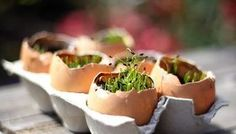 """seed starting in egg shells. Simply save your cracked shells, poke a hole for drainage, fill with soil, top with seeds, water and wait. Chives and wheat grass work particularly well. Egg seedlings make great party decor and favors, guests can take them home and plant the whole thing (egg and all) right in their garden."""" -Carla of small + friendly"""