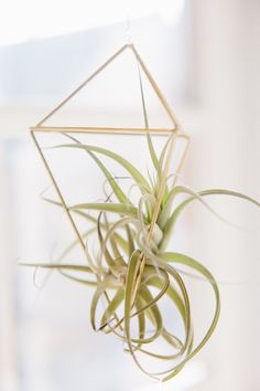 DIY Air Plant Cages with a step-by-step diagram and video tutorial. These little pieces of geometric heaven are the perfect delicate accent to add to your home decor. Air Plants, Indoor Plants, Flower Garden Images, Plant Cages, Outdoor Flowers, Geometric Decor, Diy Planters, Black Planters, Pinterest Diy