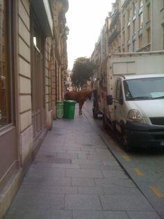 Paris, Montorggueil Area Paris is a surprise at every corner ! City Lights, Parisian, Louvre, Corner, Spaces