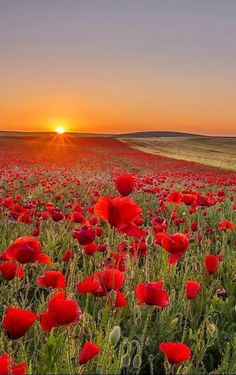 Poppies and Coreopsis Wallpaper Flowers Nature Wallpapers) – Funny Pictures Crazy Beautiful Nature Wallpaper, Beautiful Landscapes, Beautiful World, Beautiful Gardens, Beautiful Sunset, Nature Pictures, Amazing Nature, Belle Photo, Landscape Photography