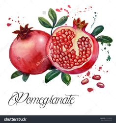 Fruit pomegranate - illustration. Hand drawn watercolor painting on white background.