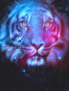 Tigers Dreams by Matt Bryson, via Behance