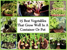 15 Best Vegetables That Grow In A Container Or Pot...http://homestead-and-survival.com/15-best-vegetables-that-grow-in-a-container-or-pot/