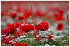 Bianco-rosso e verde....( Explore) by meoca63