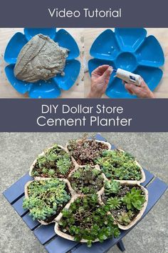 A step by step DIY tutorial and video! Use a mould from Dollar Tree to make this flower-shaped succulent planter. Tree Planters, Concrete Planters, Flower Planters, Diy Planters, Indoor Planters, Indoor Gardening, Cement Flower Pots, Cement Pots, Hanging Planters