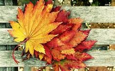 autumn photography - Bing images