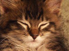 cats n kittens | Index of /pix/cats-n-kittens