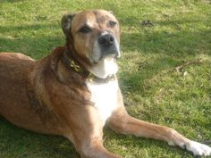 Schönster Hund der Welt ? Natürlich ...Charly Budimir !!!