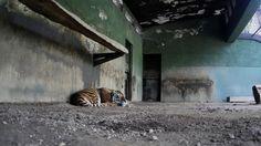 Burocracia lenta. 400 Animales encerrados en Zoo de Montevideo!!   Hace 11 meses que se clausuro el zoo de Villa Dolores en plena ciudad de Montevideo. Estos animales nunca fueron trasladados a un santuario prometido.   Estan encerrados y deprimidos, sin la dinámica a la que estaban acostumbrados de la visita de personas.   Encerrados y deprimidos injustamente por la lenta burocracia que decide sus vidas.   Con esta petición se pide ACCIÓN YA!!