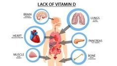 Vitamin D 101 – Benefits, Deficiency, and How to Source