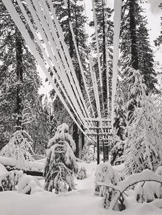 1940 Telephone Wires, Snow, Yosemite by Ansel Adams 84.91.181