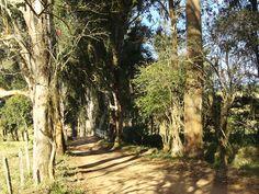 Alameda..Sul de Minas, Brasil.