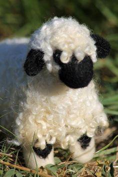 swiss mt sheep