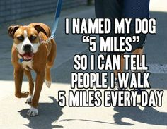 """I named my dog ""5 Miles"" so I can tell people I walk 5 miles every day.""      HomeMatters101 on Pinterest"