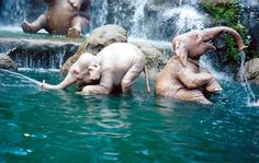 Baby elephants playing in water (:
