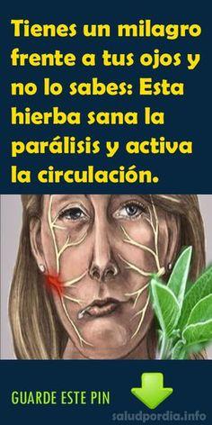 Tienes un milagro frente a tus ojos y no lo sabes: Esta hierba sana la parálisis y activa la circulación. - Salud por Día