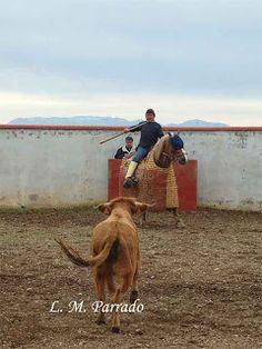 películas taurinas | Foto: Luis Miguel Parrado