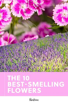 These 10 Best-Smelling Flowers Are Better Than Any Candle art design landspacing to plant Peony Arrangement, Wedding Flower Arrangements, Garden Plants, House Plants, Best Smelling Flowers, Easy Vegetables To Grow, Mean Green, Planting Flowers, Flowers Garden