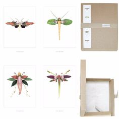Winged Flora Picture Box - Set No 4: Super talented Swedish duo, photographer Peter Ericsson and florist Linnea Persson, enthrall with their floral masterpieces. An orchid becomes an insects body, alstroemeria petals become wings and anther become antenna, to name just a few of their floral finds.