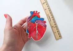 Anatomical Heart, Laptop stickers, vinyl stickers, bumper sticker, science, Anatomical Heart Sticker, science sticker, cool sticker by sandraculliton on Etsy https://www.etsy.com/listing/384611782/anatomical-heart-laptop-stickers-vinyl