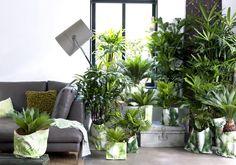Groen wonen   Let's get tropical: exclusieve palmen - Woonblog StijlvolStyling.com (beeld: Bloemenbureau Holland)