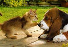Cât de importante sunt animalele de companie pentru copii?