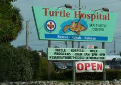 turtle+hospital+marathon+fl | Turtle Hospital | Marathon Florida Keys Vacation Planning Guide