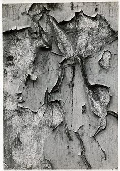 Texture from peeling bark Micro Photography, Paint Photography, Dream Photography, Texture Photography, Abstract Photography, Fine Art Photography, Street Photography, Aaron Siskind, Ghost In The Machine
