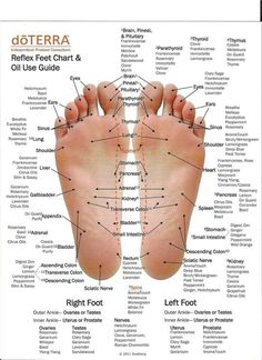 doTerra Foot Reflexology Chart and Essential Oil Usage Guide! Essential Oil Chart, Essential Oil Diffuser Blends, Doterra Essential Oils, Essential Oil On Feet, Uses For Essential Oils, Oregano Essential Oil, Essential Oil Spray, Essential Oils For Headaches, Bergamot Essential Oil