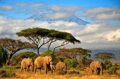 Tanzania, Africa