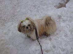 Die sneeuw is toch maar koud aan mijn pootjes hoor!!!❄️⛄️❄️