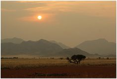Dans la savane africaine